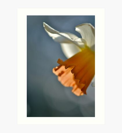 Narcissus in Light Art Print