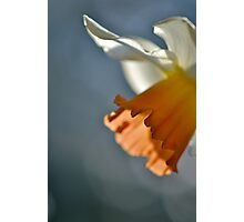 Narcissus in Light Photographic Print