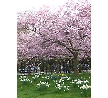 Spring in Regents Park Photographic Print