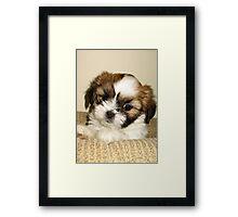 Cute Pup Framed Print