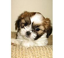Cute Pup Photographic Print