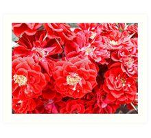 Dashing Roses Art Print