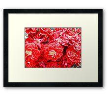 Dashing Roses Framed Print