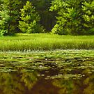 water lilies by edisandu