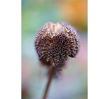 Seed Head with Colorful Background Photographic Print