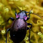 Purple Beetle by Themossgirl