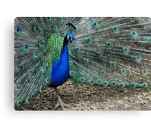 Peacock Blue Canvas Print