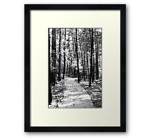 Path Through the Trees Framed Print