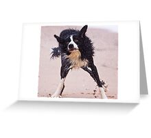 Crazy dog shaking after having a swim Greeting Card