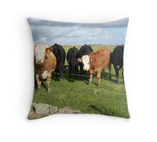 Cows in field, brown and black Throw Pillow