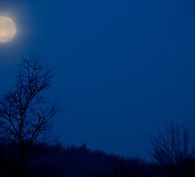 December Moon at Dawn by Mary Ann Reilly