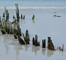 Shipwreck Recovery Remains by wilderness
