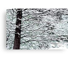Tree Branches in Snow Canvas Print