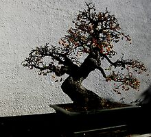 Berries by BuddhasWhiskers