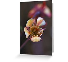 Funny flower Greeting Card