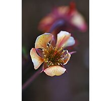 Funny flower Photographic Print