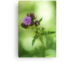 Fuzzy Thistle Canvas Print