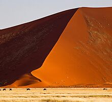 Namibia - Oryx in Naukluft sand dunes by Flemming Bo Jensen