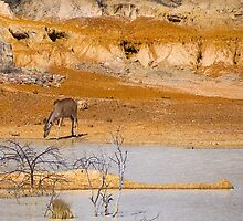 Kudu at the Watering Hole by RatManDude
