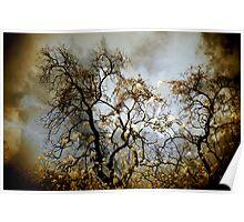 Parma Park Burnt Oak Poster