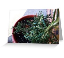 Potted Greeting Card