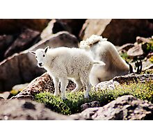 Lil' Goatie Photographic Print
