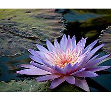 Lavender Promise Photographic Print