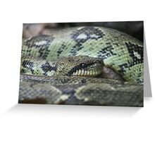 What do you mean you can sssssssssssee me??? Greeting Card