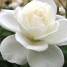 White and beautiful by Esperanza Gallego