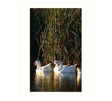 Five Geese Art Print