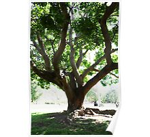 Botanic Gardens Tree Poster