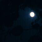 Night Sky by Kimberly Johnson