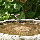 Bird Bath. by CarrieCollins