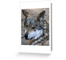 Its the Big Bad Wolf and he's looking good. Greeting Card