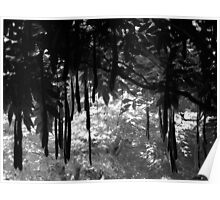 Hakone Gardens, Saratoga, California. A Plant with Pods in Black and White. 2008  Poster