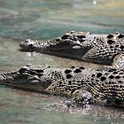 basking buddies by Alisha Hilton