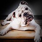 Bulldog by Carlos Restrepo