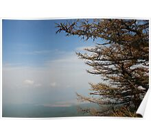 Trees on Mount Fuji  Poster