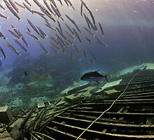 A school of young barracudas by Aziz T. Saltik