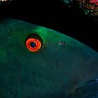 A green parrotfish sleeping by Aziz T. Saltik