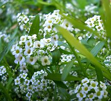 Small flowers. by Vitta