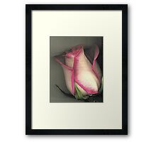 Paper Rose Framed Print