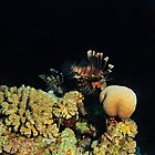 A pair of lionfish over a patch of reef by Aziz T. Saltik