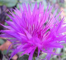 Gentle flower. by Vitta