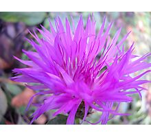 Gentle flower. Photographic Print