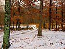 Winter Alburn by NatureGreeting Cards ©ccwri