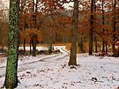 Winter Alburn by NatureGreeting Cards ©ccwri