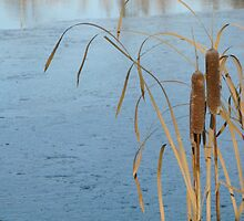 Cattails on Ice by kenspics