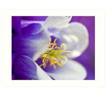 Shades of deep purple Art Print