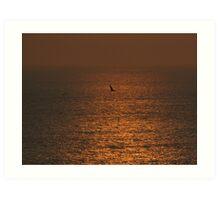 bird silhouetted against sunset Art Print
